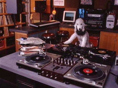 poodle DJ with headphones and 4 turntables